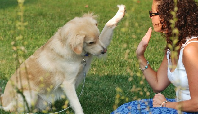 Dog-trick-high-five