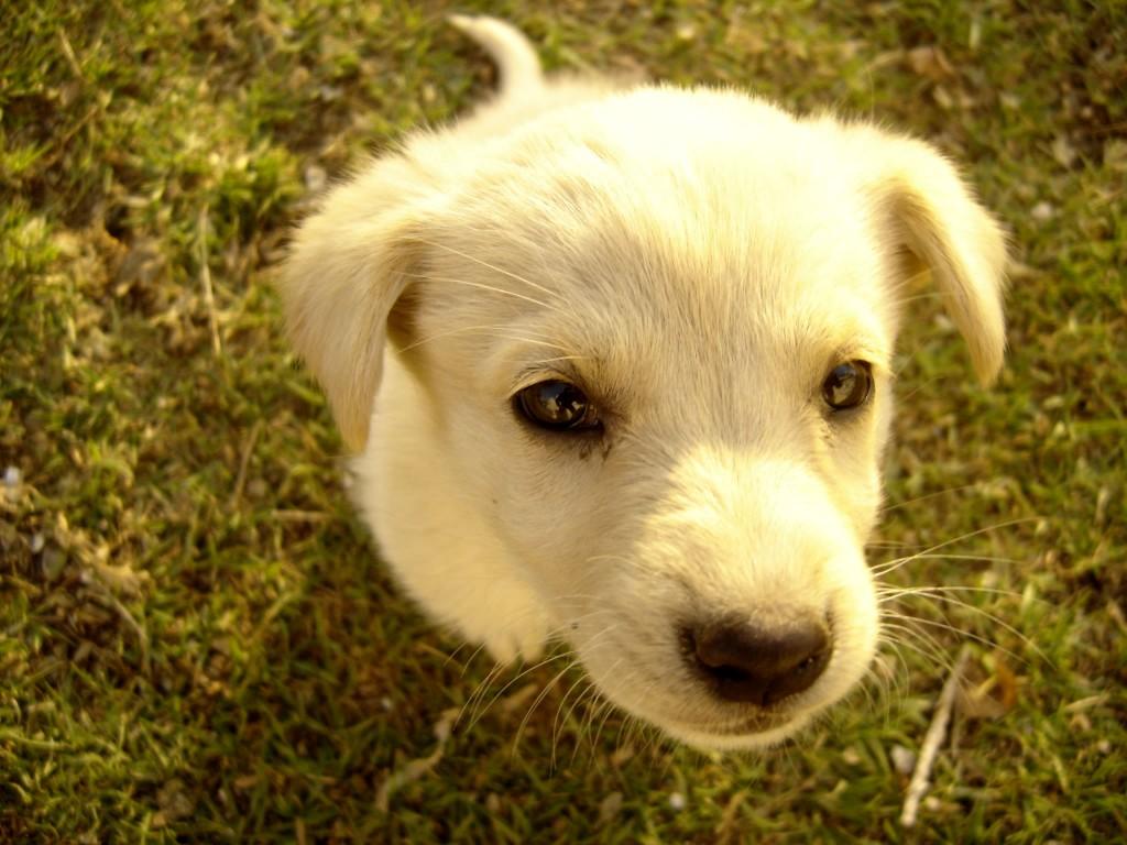 cute puppy treats
