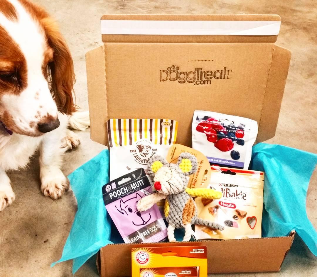 Dog Treat Subscription Box - April 2017