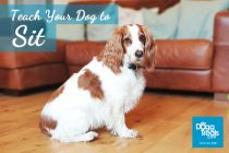 Teach Your Dog to Sit in 10 Easy Steps