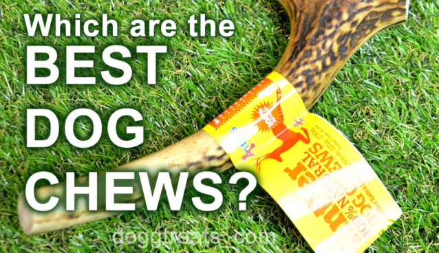 Which are the best dog chews for my dog?